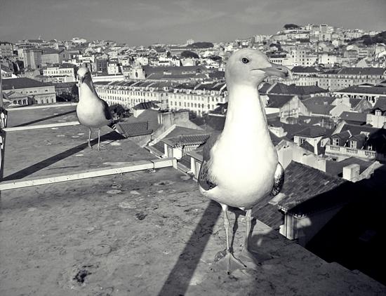 JOANNA_DUDEK_Lisboa.JPG